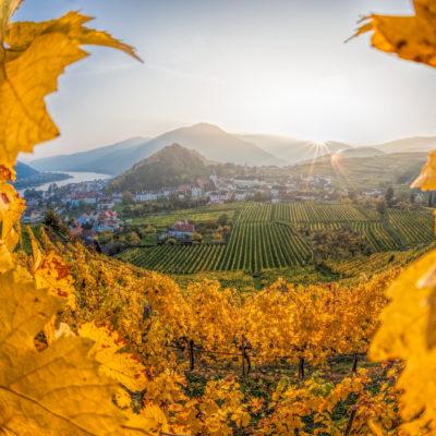 Wein Niederösterreich