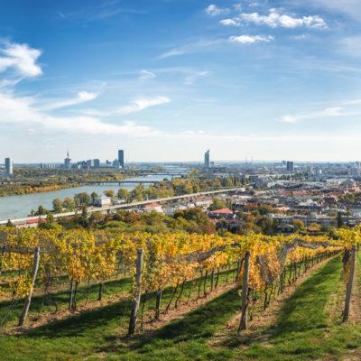Wein Wien